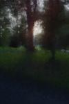 IMG_0595